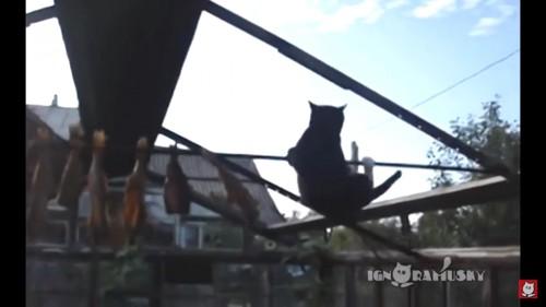 足を滑らせる猫