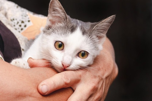 抱っこされている猫