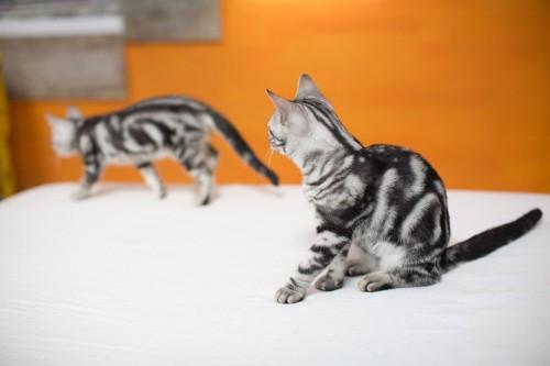 窓辺で寄り添う猫たち