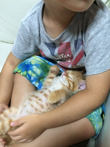 膝の上で眠る子猫