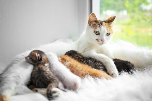 部屋の中で子猫のお世話をする母猫