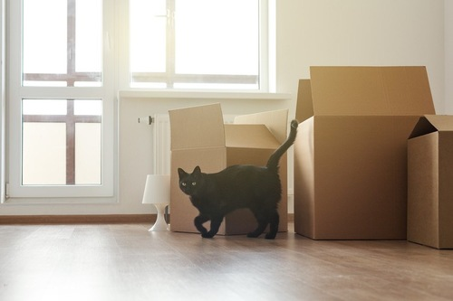 ダンボール箱と黒猫