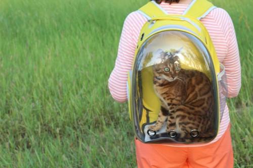 背中のリュックに入っている猫