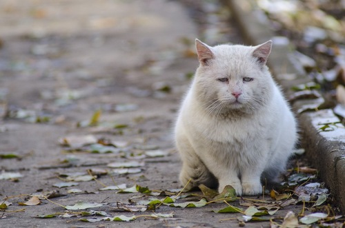 情けない顔の猫