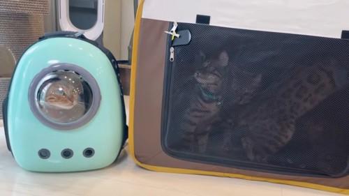 ケージとキャリーバッグに入った猫たち