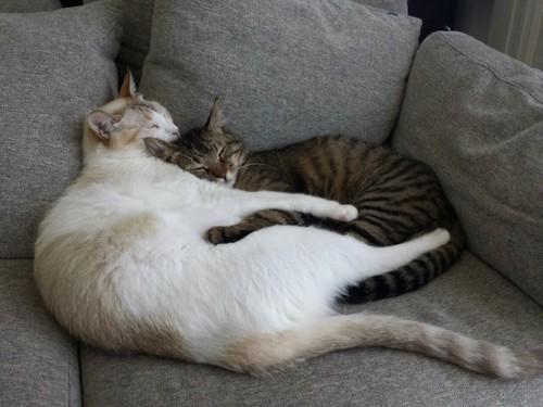 寝ている小太郎と弟猫
