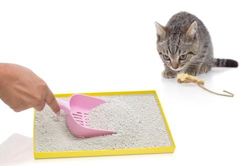 猫砂をすくう手とそれを見ている猫