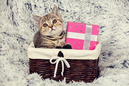 籠の中の猫とプレゼント