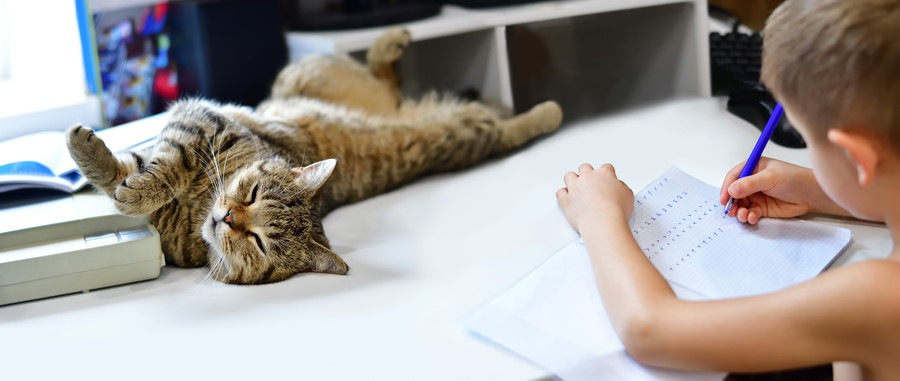 宿題を見守る猫