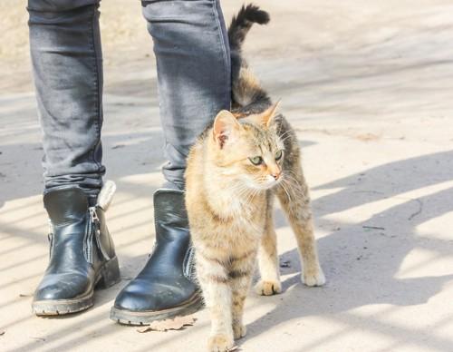 人の足にしっぽをスリスリする猫
