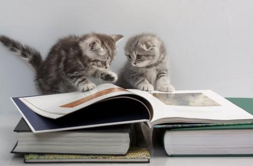 本の上で遊ぶ2匹の子猫