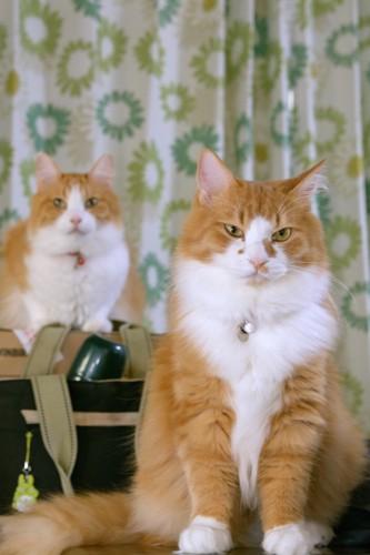 離れて座る2匹の猫