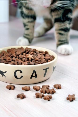 フードボウルに入ったキャットフードと猫