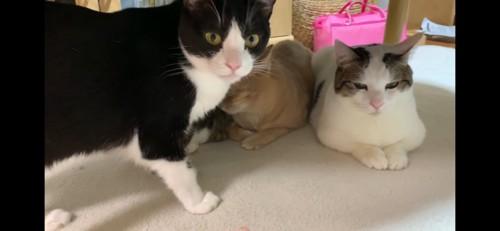 母猫ちゃん