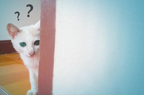 壁からのぞく猫とクエスチョンマーク
