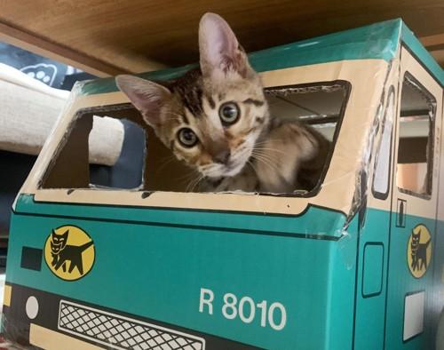 クロネコヤマトのベンガル猫