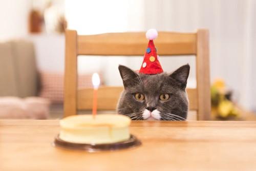 誕生日ケーキと猫