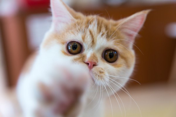 手を差しだす猫