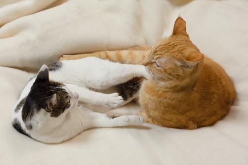 ベッドの上で茶トラ猫を足で蹴る白黒の猫