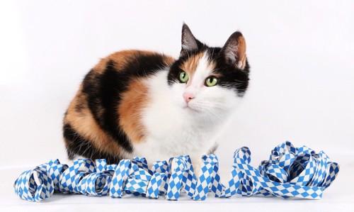 浴衣の帯のそばでくつろぐ三毛猫