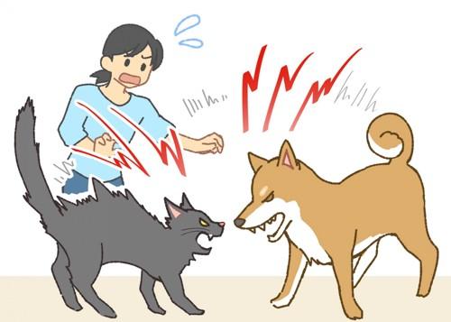 猫と犬を一緒に飼う前に知っておくべきこと
