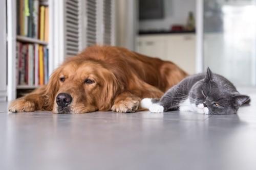 並んで眠る猫と犬