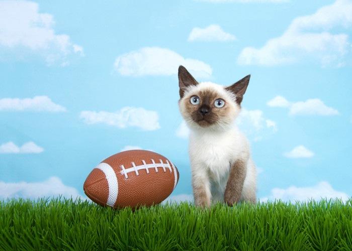 ラグビーボールと猫