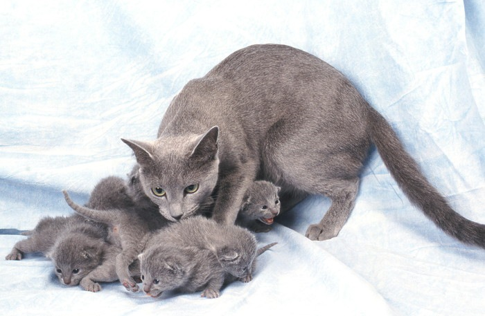 産後の母猫と子猫