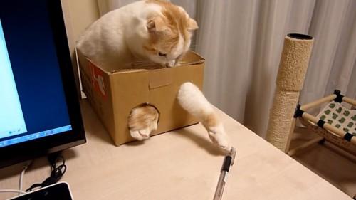 小さい穴から前足を出す猫
