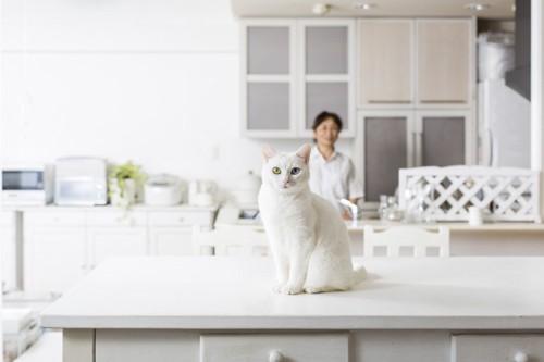 リビングにいる白猫