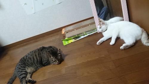 先住猫とキジトラ