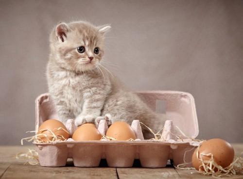 卵のケースに入った子猫