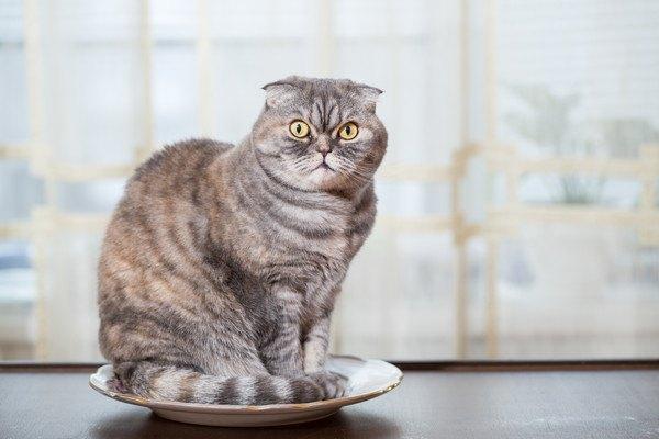 皿の上に猫