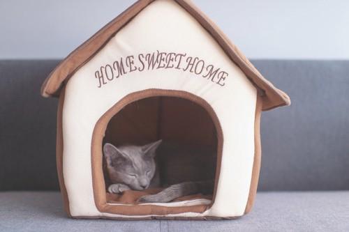 天井のある猫ハウス
