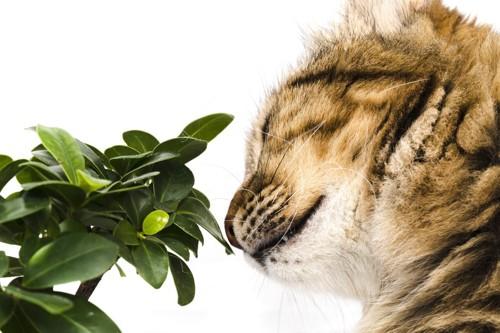 草の臭いを嗅ぐ猫