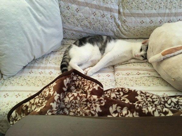 姿勢正しく寝る猫