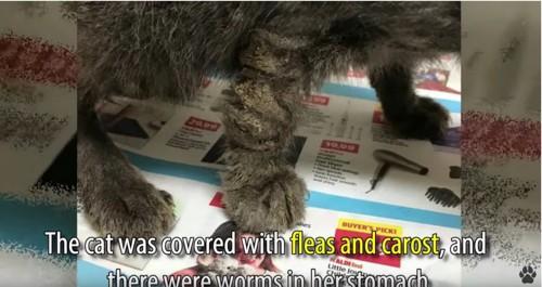 毛が固まった猫の足
