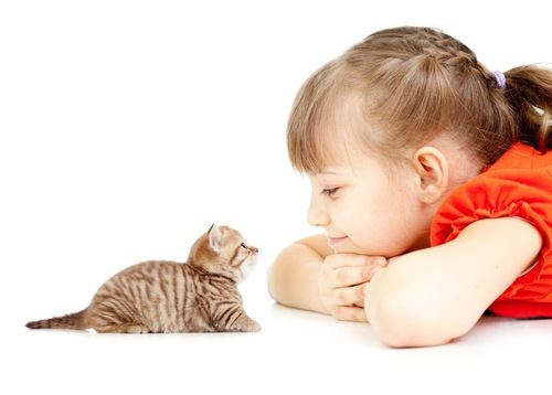 女の子と目を合わす子猫
