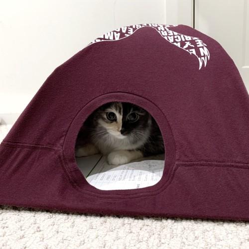 猫がテントに入っている姿