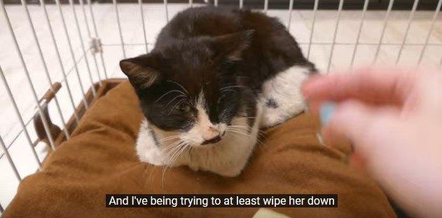 猫ベッドに香箱座りの猫