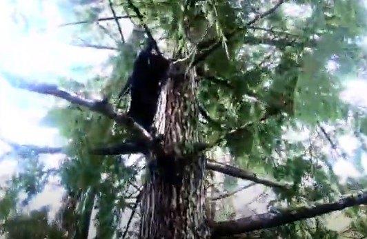 木を降りだすMama