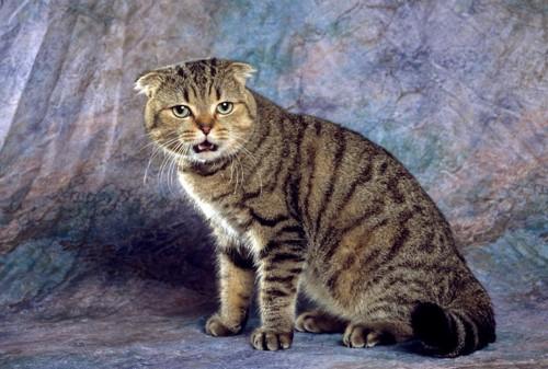 こちらをじっと見て鳴く猫