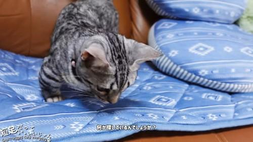 マットの上で何かを探す猫