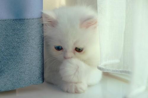 物陰に隠れる子猫