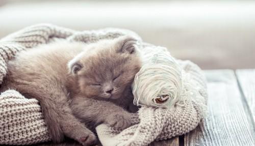 セーターの上で眠る子猫