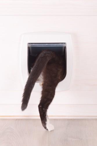 キャットドアから中に入る猫