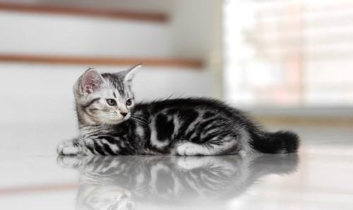 床でくつろぐ子猫