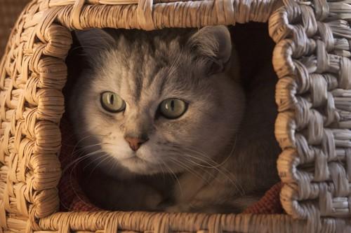 猫ちぐらに入っている猫