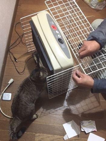 作業中に猫が右側にいる。