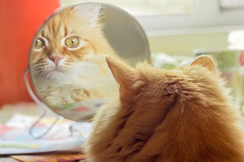 鏡に映る自分の姿を見つめる猫